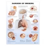 Smoking Chart - Dangers of Smoking