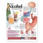Alcohol Chart - Dangers of Alcohol 2nd Ed