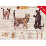 Feline Skeletal System Wall Chart Cat