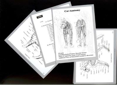 Canine + Feline Anatomy Flashcards SPECIAL OFFER