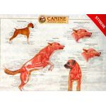 Canine Anatomy Chart Set of Three Wall Charts BUY THE SET AND SAVE!