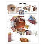 Eye Chart - The Eye