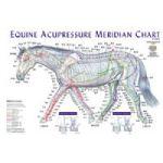 Equine Acupressure Meridian Chart Tallgrass IAATH