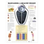 Obesity Chart - Maintaining a Healthy Weight
