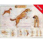 Canine Skeletal Wall Chart, CLASSIC Now Available!