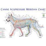 Canine Acupressure Meridian Chart Dog
