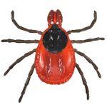 Flea Tick Mite Dog Parasites Anatomical Models