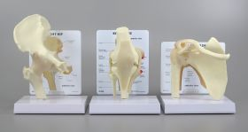 Bone Joint Set of 3 Unmuscled Models - Knee, Hip, Shoulder    SPECIAL OFFER 20% DISCOUNT  LFA # 4018