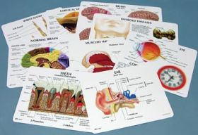 Key Card Anatomical Set of 78