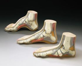 Foot   Anatomy Models Set of 3 Budget Podiatry