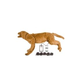 Canine Breath Heart Sound BHS Simulator Training Model GOLDIE®