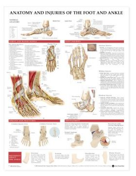 Foot Ankle Chart - Anatomy and Injuries of the Foot and Ankle